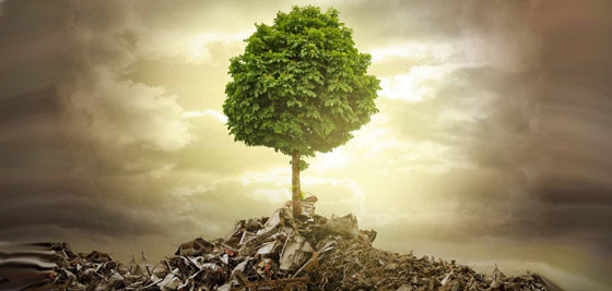 Adapting to Life. A tree growing from a junk pile. A Flourishing Life Society Image header